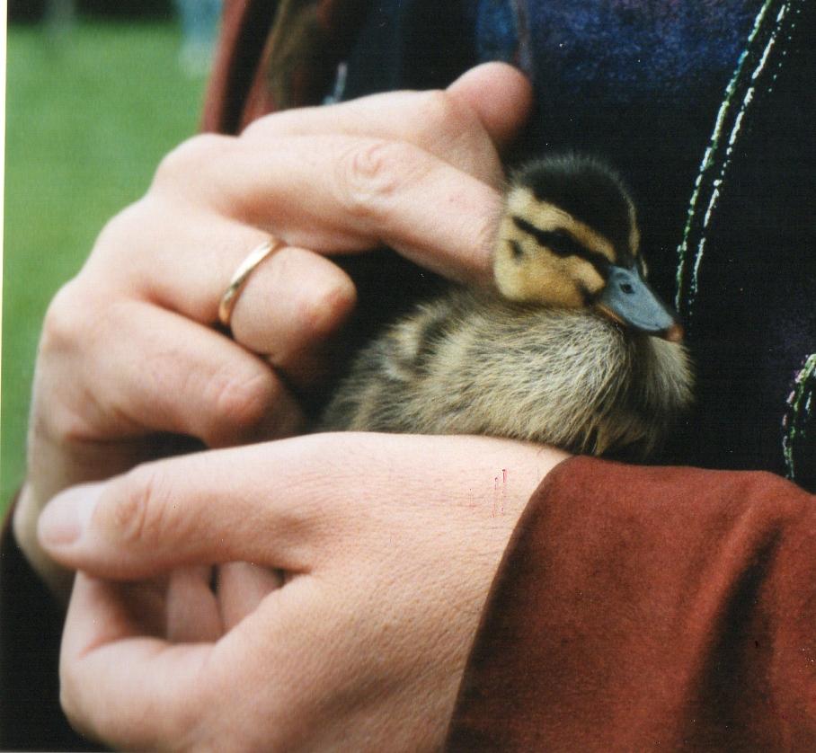 ducky3032(2)